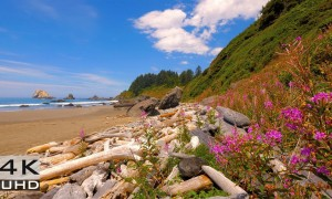 Sounds of the Pacific Ocean, Nature Relaxation Video in 4k - 8 hours