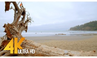 4K 10-bit Color Nature Relax Video - Third Beach Trail, Olympic National Park, Washington State, USA