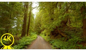 Roads of Olympic National Park: Oil City Road - 4K 60 fps Scenic Drive Video