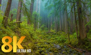 8K/8K HDR Olympic National Park, USA. Part 2 - Nature Documentary Film with Relaxing Music