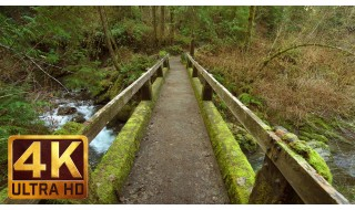 Quinault Loop Trail - 4K Rain Forest Relax Video - 3 HRS