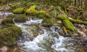 HD Nature Relax Video - Redtown Medow Trail, Washington, USA