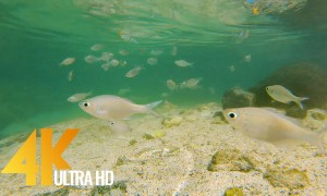 Amazing Small Fish of the Pacific Ocean - 4K Underwater Footage - 3 HOURS of Relaxation