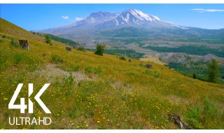 Summer Day/Mt. St. Helens/Bird Sounds/Summer Sounds - Nature Soundscapes