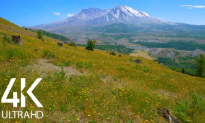 Summer Day/Mt. St. Helens/Bird Sounds/Summer Sounds - Nature Soundscapes