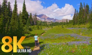 8K Relaxing Summer Walk through Paradise Area of Mt. Rainier National Park (with Music)