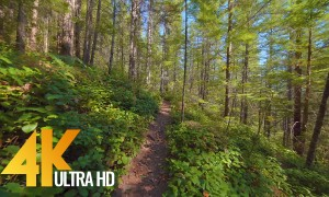 Cedar Butte Trail - 4K Nature Walk Video - 1 HR