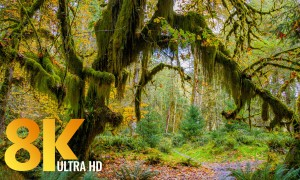8K/8K HDR Virtual Hike along the Hall of Mosses and Spruce Nature Trails - Virtual Hike Video