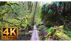 Walking in the Woods. Episode 3 - 4K (Ultra HD) Forest Scenery with Soothing Music