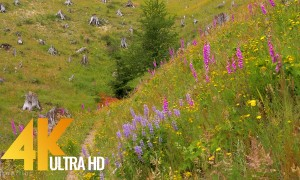 4K Nature Relax Video: Wildflowers - 3 HRS