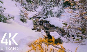 8 HOURS Soothing Sounds of a Small Forest River - 4K Winter Stream - Episode #1